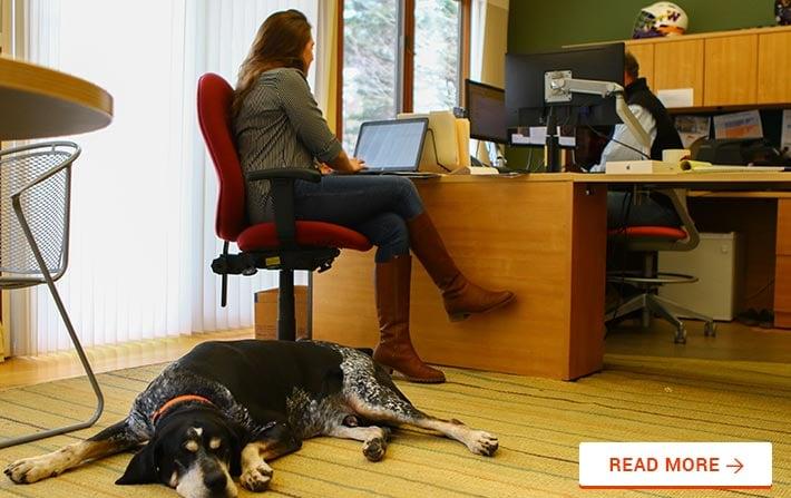 pet-friendly company