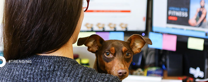Rover.com Names Zogics The 8th Best Dog-Friendly Company in the U.S.
