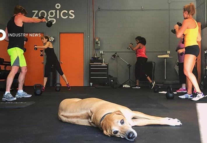 Bathtime Buddies: Zogics Launches A Line For Our Best Friends